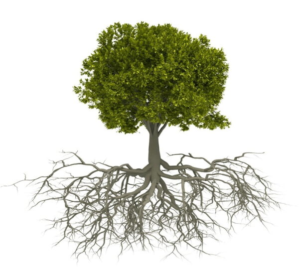 business-growth-and-personal-growth-tree
